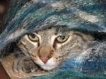 Elsie hiding