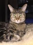 Elsie le Chat