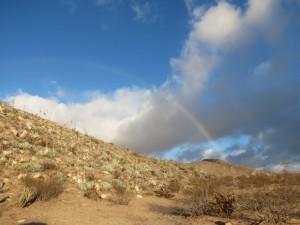 A rainbow kind of morning