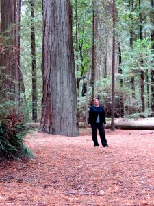 Janet in the Redwoods