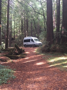 RT in the Redwoods